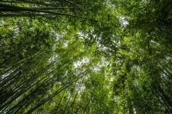 Кампания за озеленяване на Холдинг Варна АД